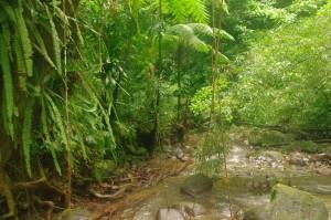 La forêt tropicale humide.  Impressionnante comme tout.