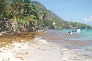 Seul bémol : les sargasses venues du large et qui, par endroits, recouvrent les plages. Un fléau puisque la présence massive des algues ont un sérieux impact sur les écosystèmes côtiers.